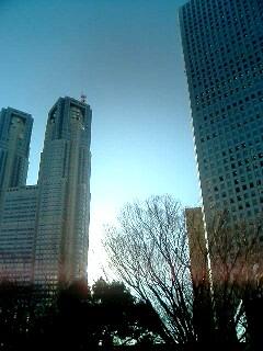 東京に来ています